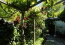 Wein und Rosen